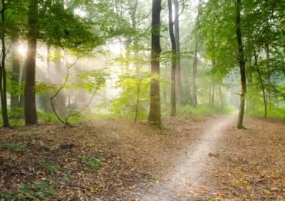 praktijk voorbeeld wandelcoaching nederland